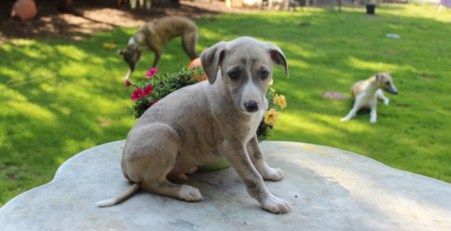 Titus 6 Wochen alt