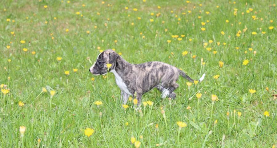 Twiggy 4 Wochen alt