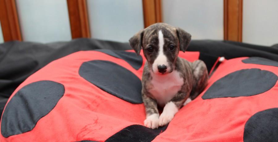 Twiggy 5 Wochen alt