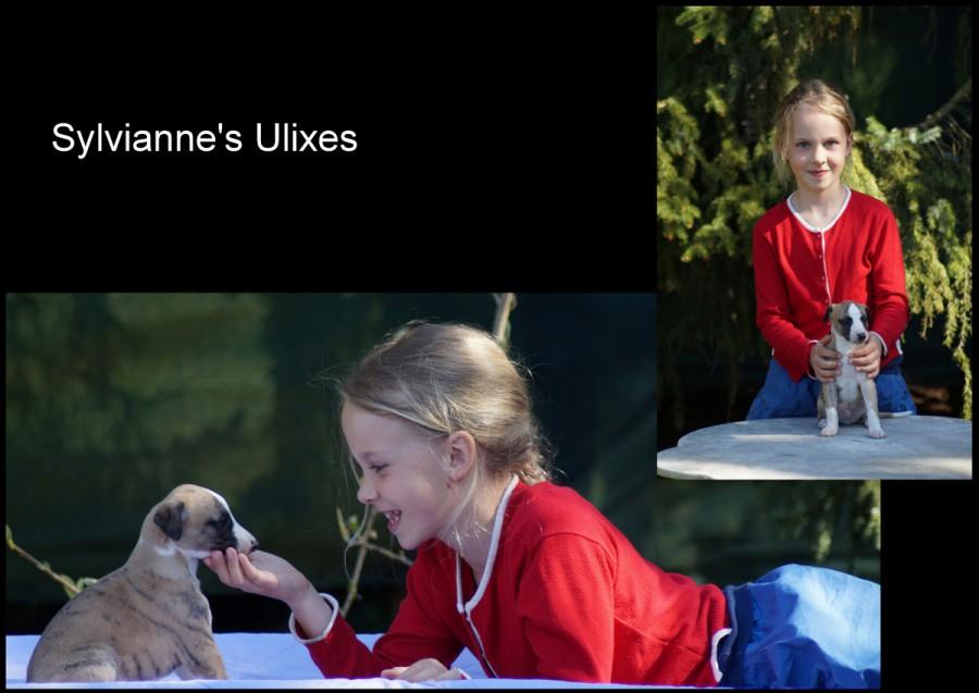 Ulixes fast 5 Wochen alt