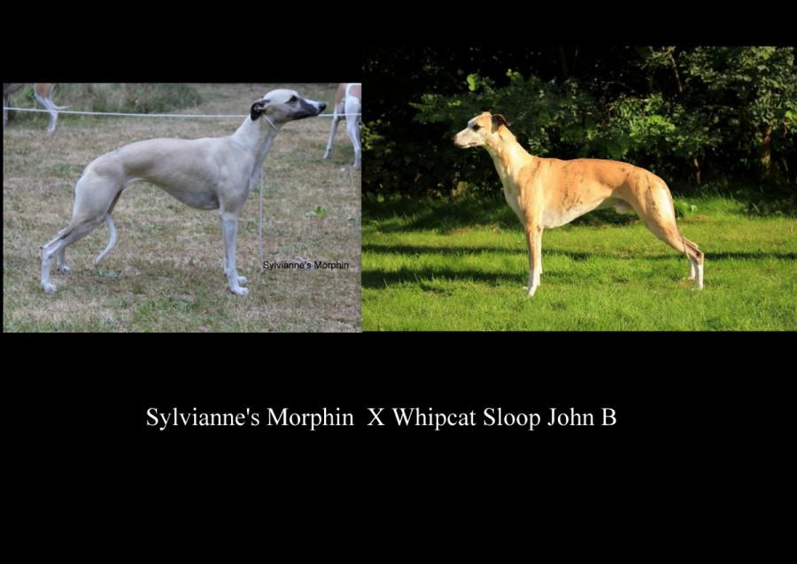 Sloop B X Morphin