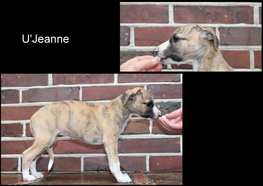 U'Jeanne 6 Wochen alt