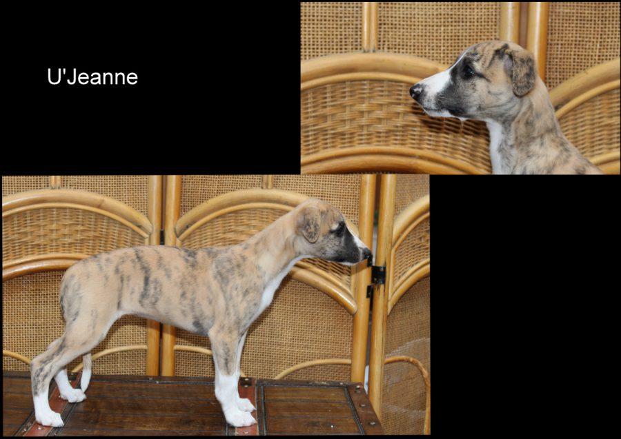 U'Jeanne 8 Wochen alt