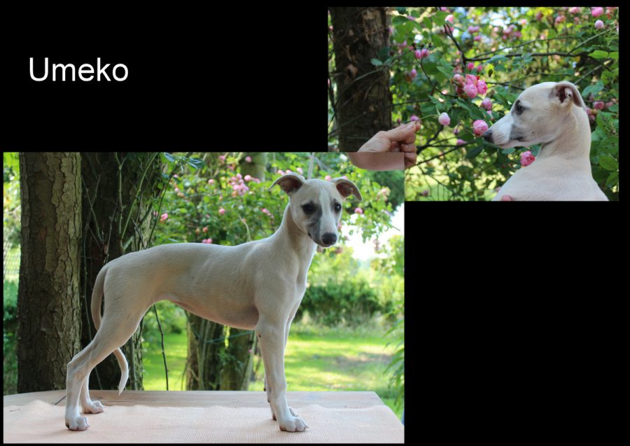 Umeko 12 Wochen