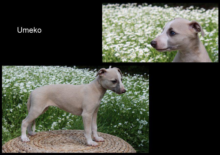 Umeko 7 Wochen alt