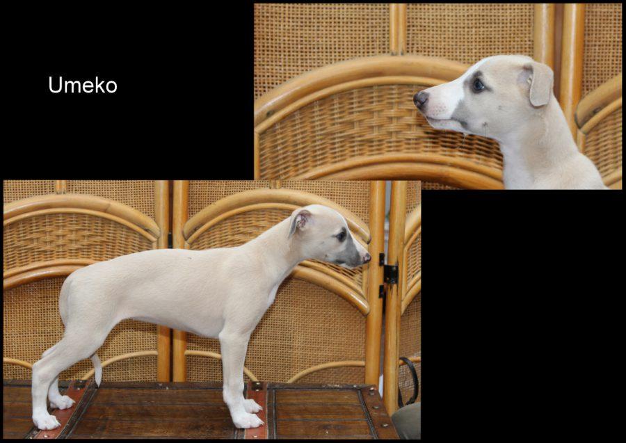Umeko 8 Wochen alt