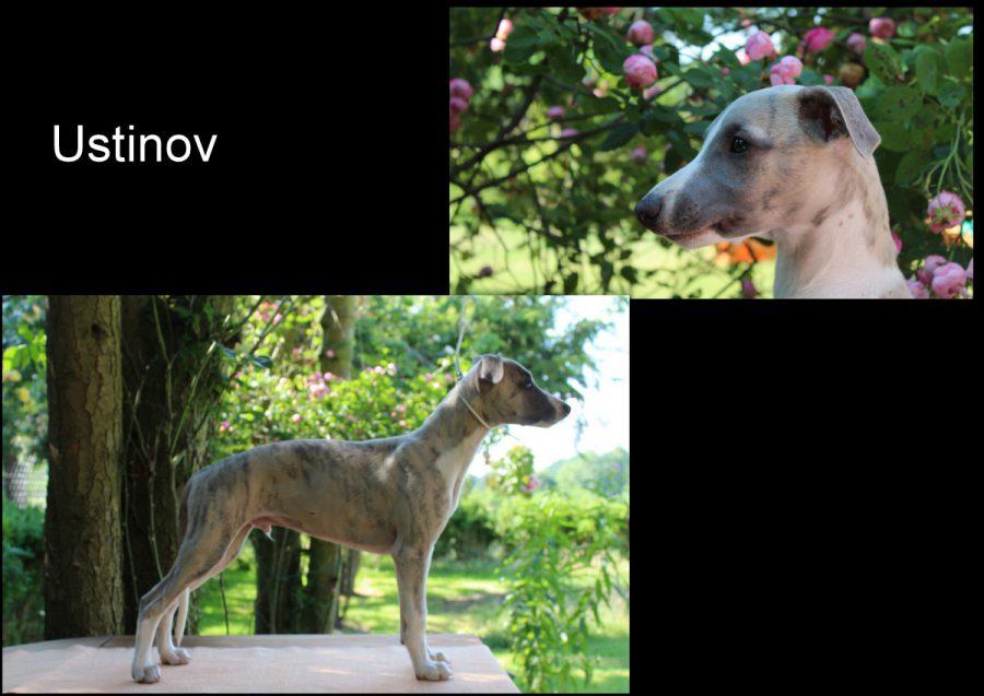 Ustinov 12 Wochen