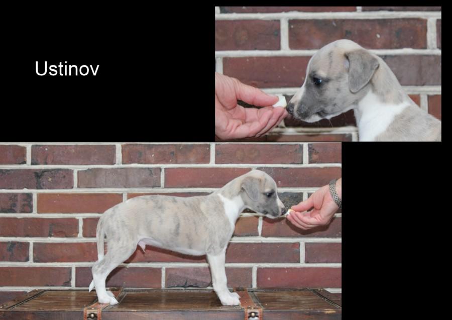 Ustinov 6 Wochen alt
