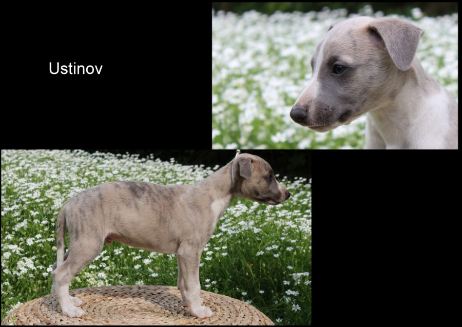 Ustinov 7 Wochen alt