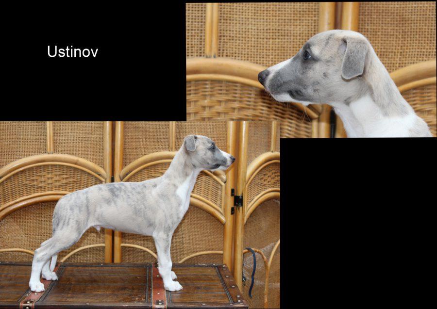 Ustinov 8 Wochen alt