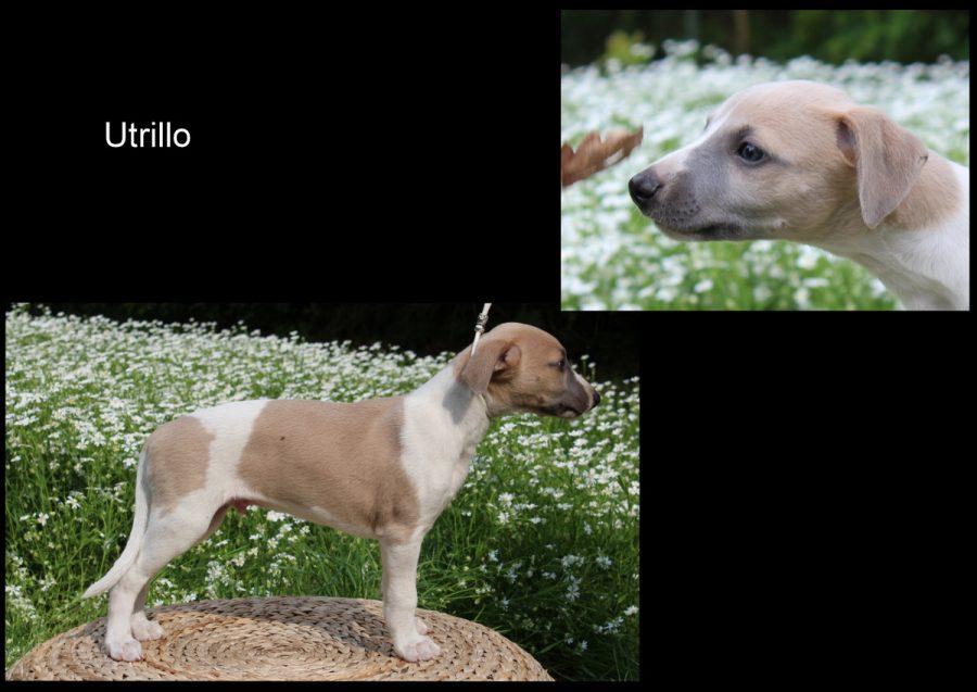Utrillo 7 Wochen alt