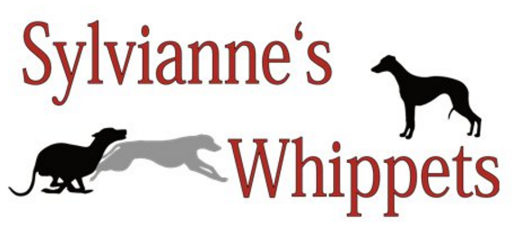Sylvianne's Whippets