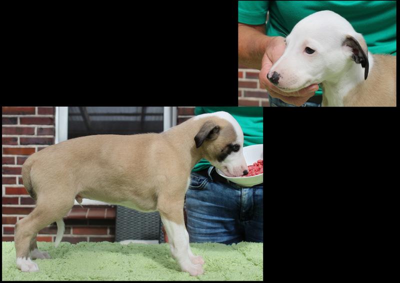 Watson 6 Wochen alt