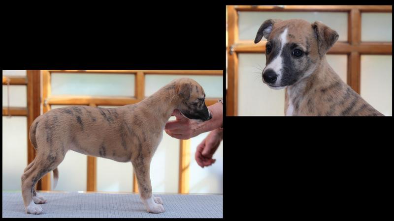 Ymoya 6 Wochen alt