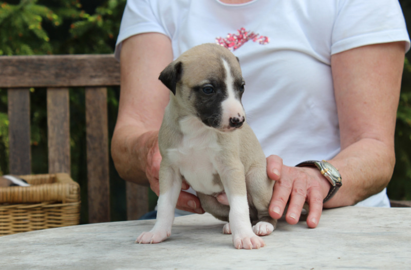 Zeno 4 Wochen alt