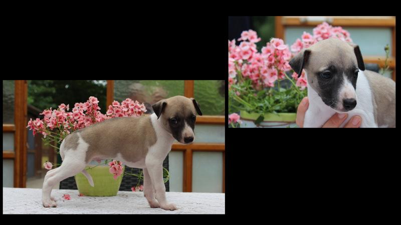 Zampano 5 Wochen alt