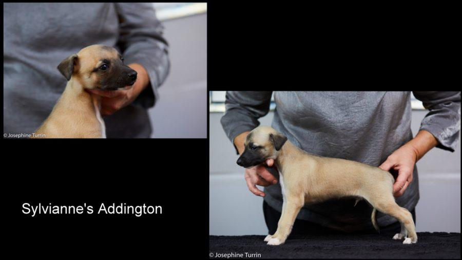 Addington 5 Wochen alt