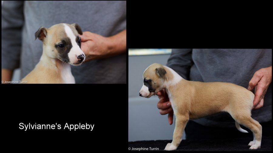 Appleby 5 Wochen alt