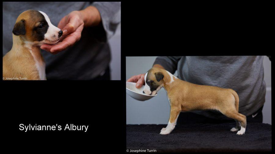 Albury 5 Wochen alt