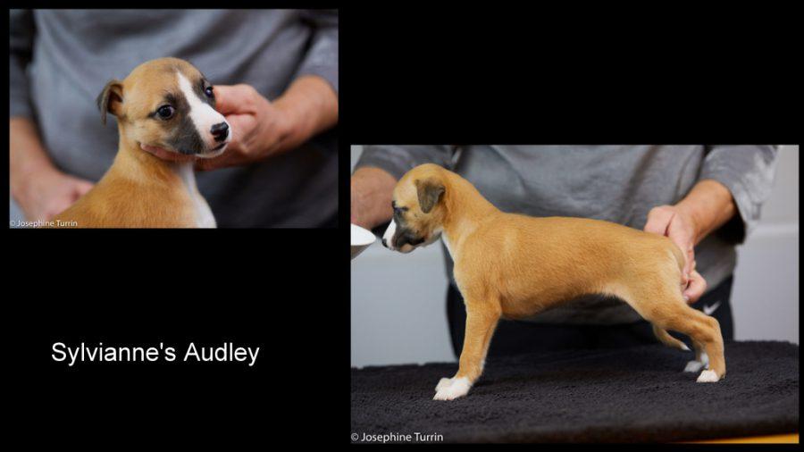 Audley 5 Wochen alt