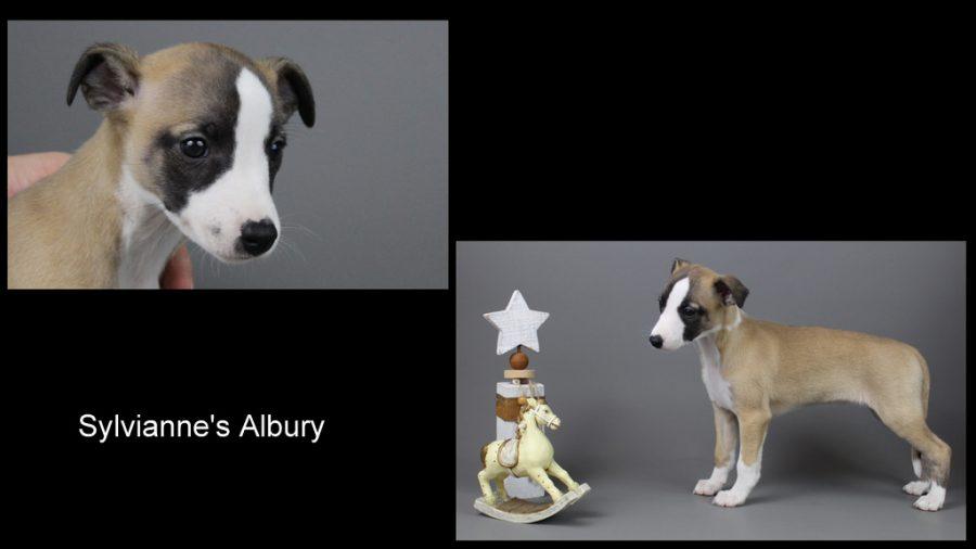 Albury 7 Wochen alt