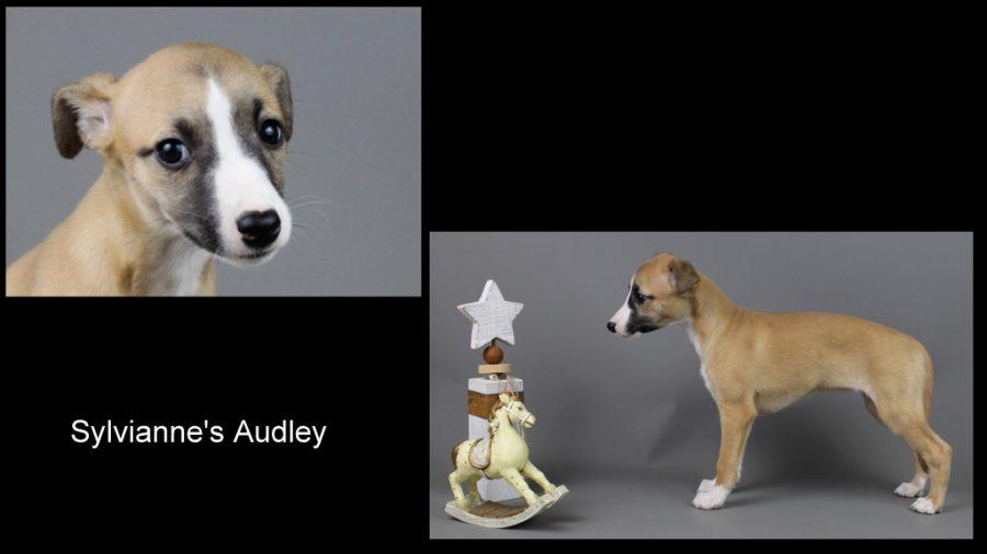 Audley 7 Wochen alt