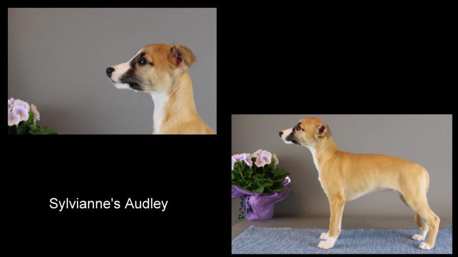 Sylvianne's Audley 8 Wochen alt