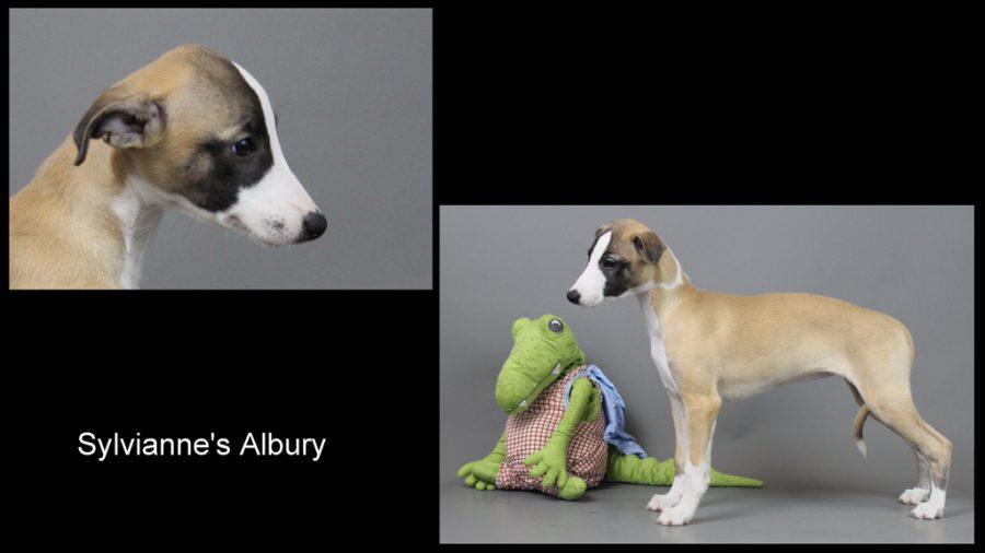 Sylvianne's Albury 10 Wochen alt