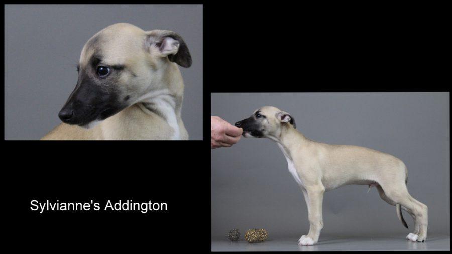 Addington 9 Wochen alt