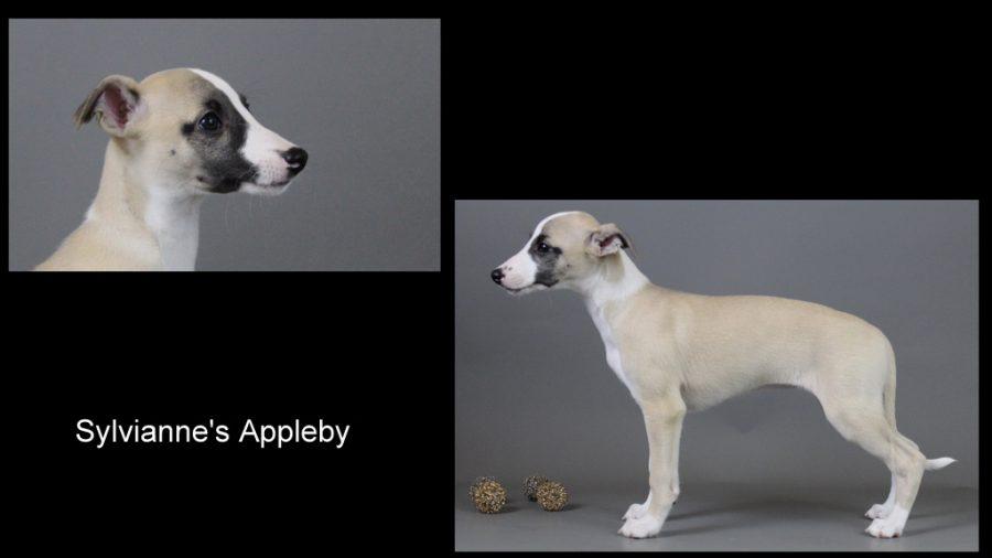 Appleby 9 Wochen alt