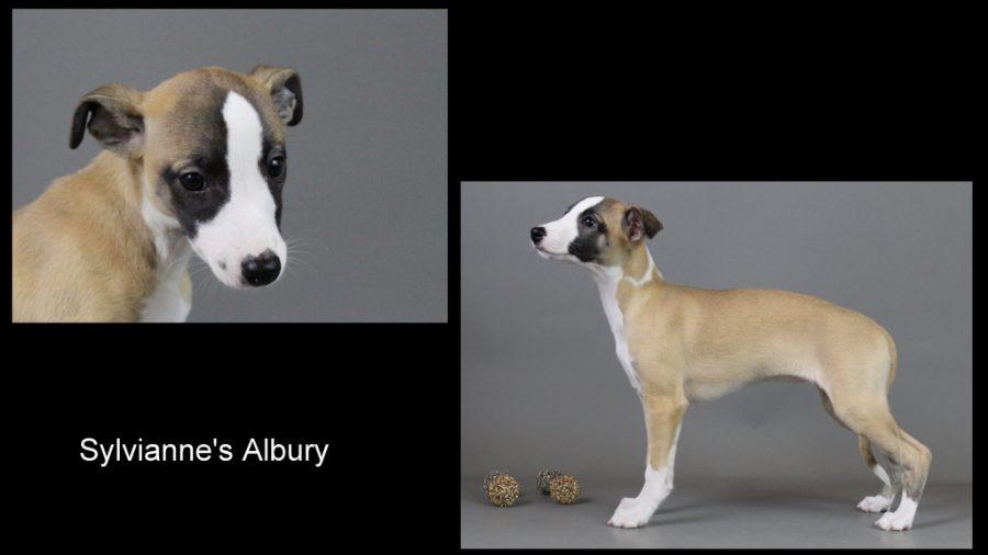 Albury 9 Wochen alt