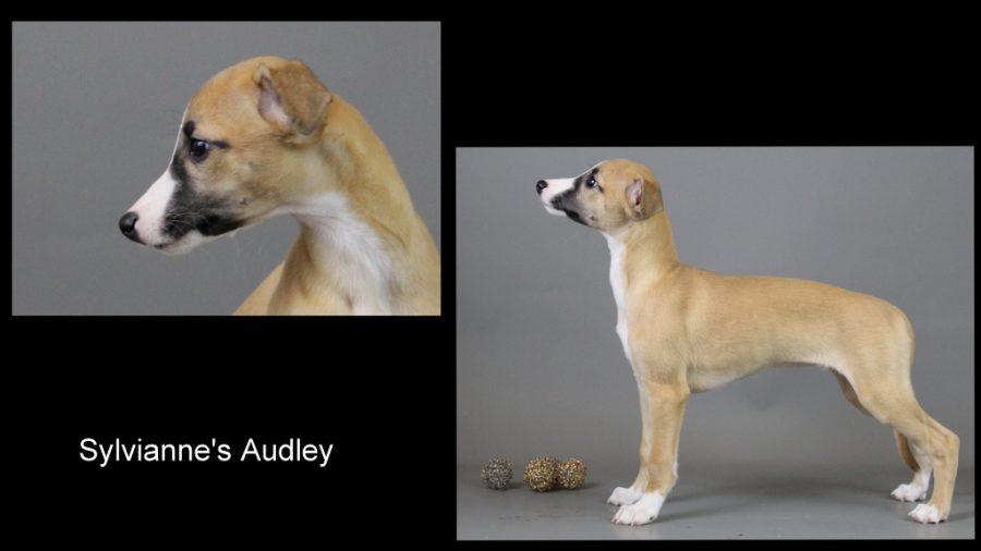 Audley 9 Wochen alt